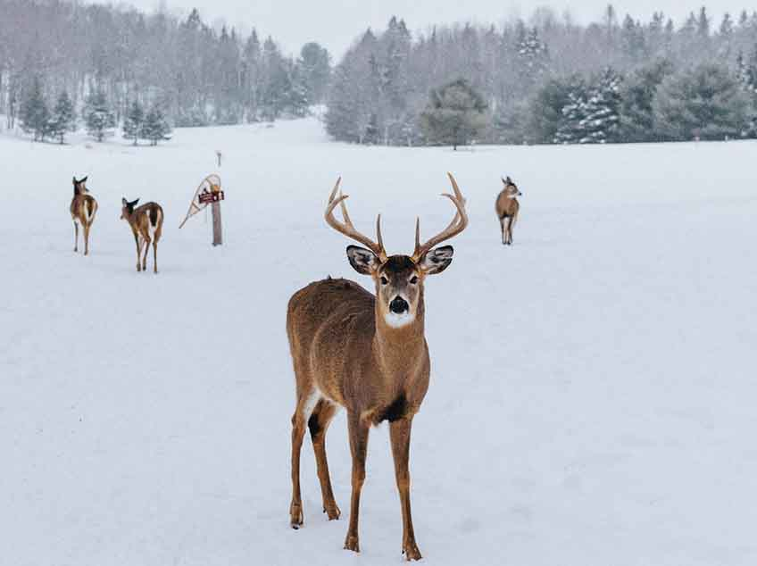 Les Elfes Winter camps - 8 activities for winter - animals